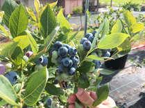 吉備高原の昼夜の寒暖の差により、甘く美味しい実に育ちます