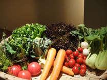 摘みたてのフレッシュな野菜達は「鎌倉野菜」や「自家菜園」。濃厚な野菜の旨みを堪能して下さい!!