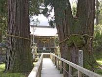 パワースポット☆樹齢2300年、霊験あらたかな「栢野大杉」を訪れて…