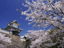 桜の季節は、金沢城でのお花見もおすすめです。