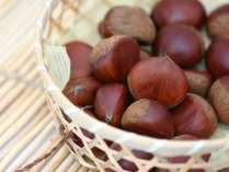 ◆9月限定◆≪旬の食材♪季節を味わう≫栗と松茸で贅沢な秋を楽しむ