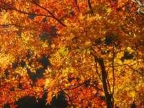 【11月お日にち限定!最大1,620円割引♪】秋の魅力満喫!自慢の16趣お風呂巡りで体もほっこり♪