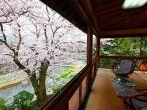 『葵』のお部屋は、桜の時季はご自由に鑑賞できるスペースに!(※21時まで)