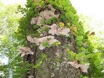 *木から生えたキノコ。秋にはこんな光景をたくさん見かけます。