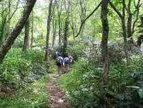 *トレッキングでは原生林の中をゆっくりと歩き、木々の呼吸を感じてください。