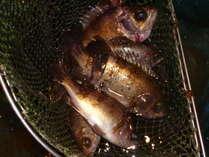 新鮮活魚!