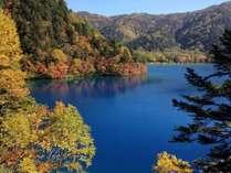 【秋】志賀高原の紅葉。大沼池
