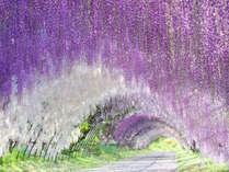 【周辺】アメリカCNN日本の最も美しい場所31選にも選出された「河内藤園」