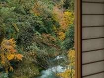 渓谷と紅葉をお部屋からお楽しみ下さいませ