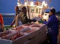 日帰り漁の橋立港、飛び切り新鮮な魚介類が当館へ直送