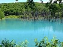 美瑛白金青い池