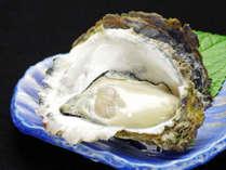 【夏グルメ】生かき/焼かき/カキフライから食べ方チョイス!地元産の岩牡蠣<1人1個付き>現金特価