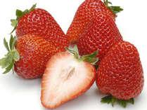 【イチゴの魔法はとけません】美味しさギュッ☆摘みたて食べ放題♪苺パフェの特典付き