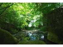 新緑の中の露天風呂
