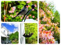 四季折々の植物と可愛い小動物もたくさん^0^