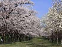 【お花見◎】赤城千本桜を観て温泉でゆっくりプラン