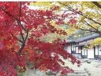 庭側の紅葉の風景