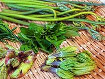 【6月限定】山菜好き集まれ~山菜が美味しい季節です★旬の山菜てんこもりプラン♪