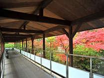 紅葉を愛でる渡り廊下「松泉峡」。まつさきの紅葉の見頃は例年10月下旬から11月中旬です