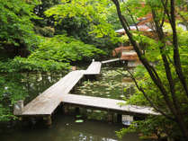 【日本庭園】松泉湖に架かる桟橋で散策お楽しみ下さい