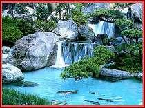 日本庭園には水音が心地よい滝や池が配され、美しい錦鯉を鑑賞できる