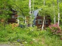 白樺と緑に囲まれて静かな場所に建つカナディアンシーダーハウス。