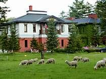 [写真]羊牧場とホテル外観