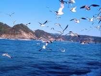 ◆観光船チケット付◆秘境満喫☆北山崎断崖クルーズプラン≪一泊二食・夕食/広間≫