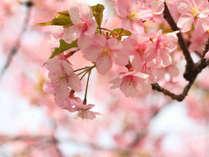 北海道で一番先に春が来る地、函館♪
