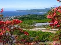 毎年5月下旬~6月上旬に見頃をむかえるつつじ。60万本もの花々が咲き誇り、山裾が真紅に染まります。