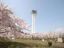 【五稜郭タワー】春は桜色の五稜郭を愉しむことができます♪