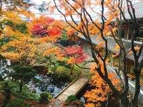 【秋の松岡庭園】函館ゆかりの由緒ある松岡庭園をそのまま保存した銘庭