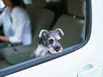 愛犬と一緒に旅行へ♪ ※イメージ