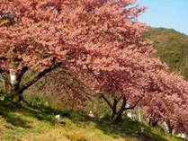 【みなみの桜祭り】春満喫♪会場へは車で約15分♪