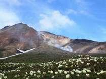 【癒旅】高山植物が咲き誇る北海道最高峰・旭岳へ!!日帰り入浴もお得♪特産品が当たるスタンプラリーも☆
