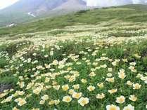 【じゃらん限定】8月タイムセール★北海道最高峰・旭岳で源泉かけ流しの天然温泉に癒されよう♪2食付き