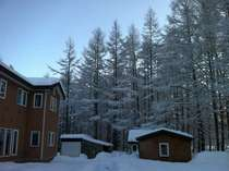 森の中、冬の帯広八千代ユースホステル