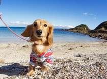 穏やかな海で初めてのワンちゃんも楽しく遊ぼう!
