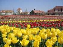 スタッフお奨め「ブルーメの丘」4月には10万本のチューリップが咲き誇ります。