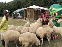 【スタッフお奨め!】「ローザンベリー多和田」ではかわいい「羊」とたわむれることも出来ますよ。
