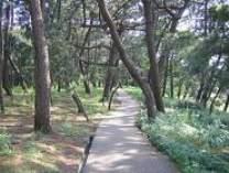 羽衣の松遊歩道