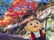 奥湯河原の紅葉は11月下旬~12月上旬が見頃♪当館から車で10分程度です!