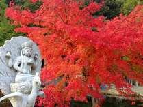 宿から徒歩2分 龍泉寺の紅葉(見頃通常10月下旬~)