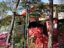 [写真]松林の中にとけ込むようにたたずむ山荘風の建物