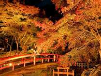 この秋、紅葉に心奪われる♪伊香保の河鹿橋で紅葉狩り~夕食は季節限定のお酒「純米 秋あがり」で乾杯~