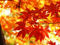 榊原の山々も、紅葉を迎える美しい秋。御在所岳など、三重には秋の魅力がたっぷり