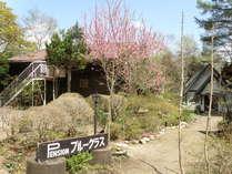 桃の花咲く庭。