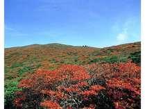 ●残暑を避けて癒し旅●【秋の栗駒山プラン】竹コース
