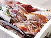 【松浦鮮魚】注文を受け市場で競り落とし郵送してくれる鮮魚店。不定休/時間9時半~12時