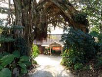 アコウの大木がお出迎え。くぐると「居酒屋民宿 珊瑚礁」が!